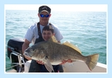 Catch Drum Tampa Bay Fishing Charters
