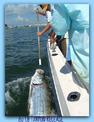 150 lb tarpon caught and released by 16 year old Matt