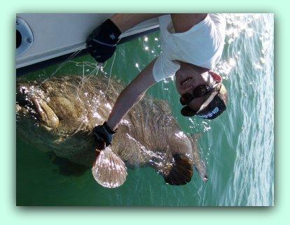 St pete shark fishing charters for Florida shark fishing charters